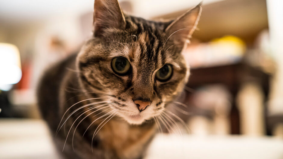 Alice the cat. Shot with the Sony RX-1. © Mike Wong