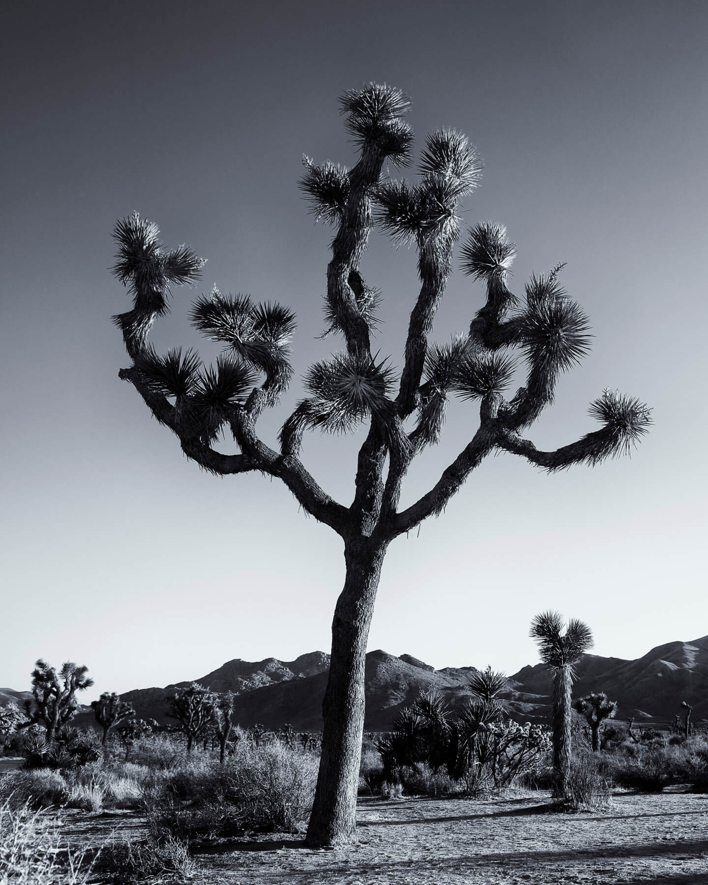Joshua Tree National Park, December 2013